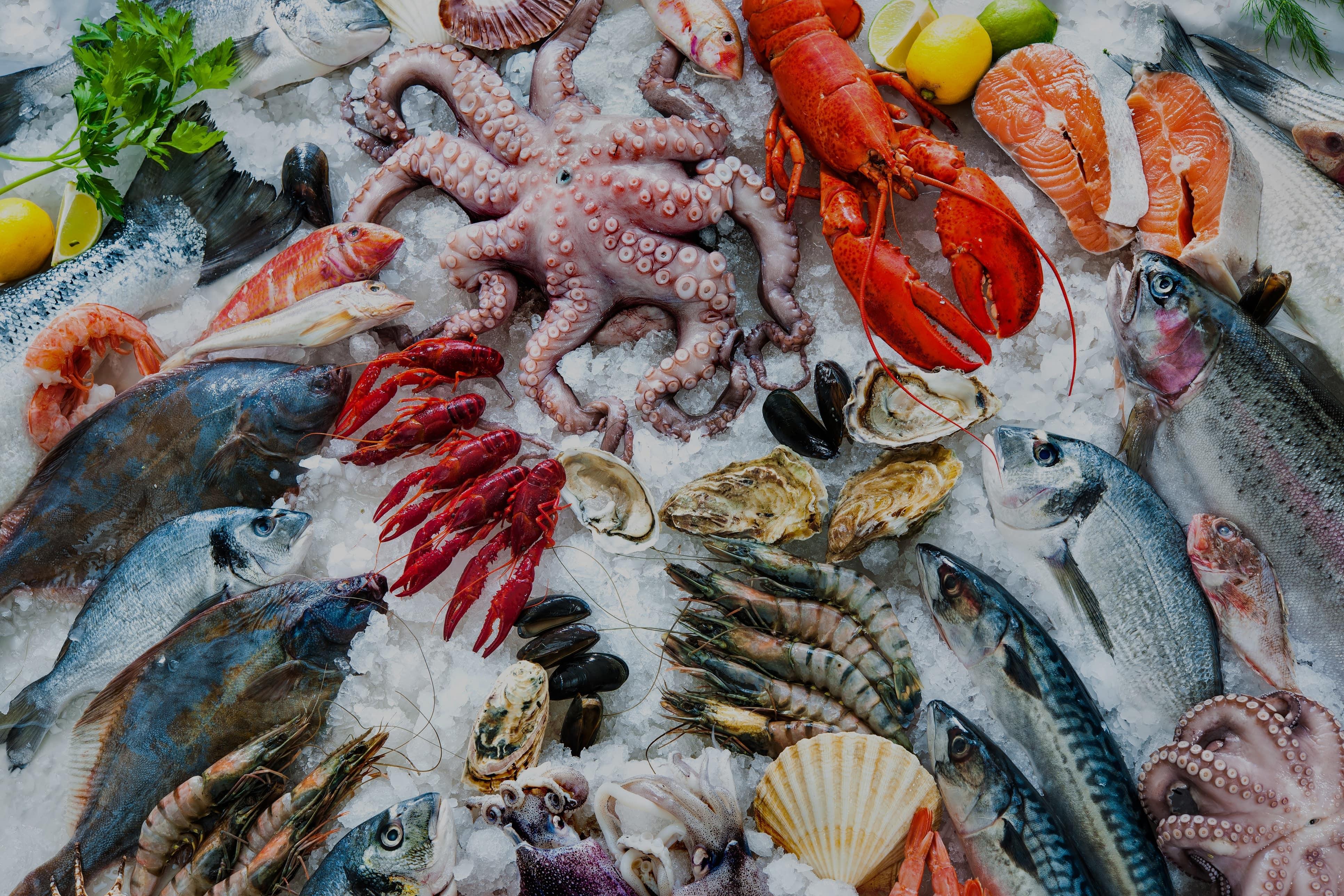 settore-ittico